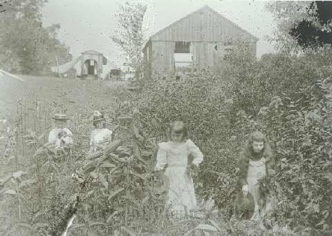 Kingsley_girls in tobacco field